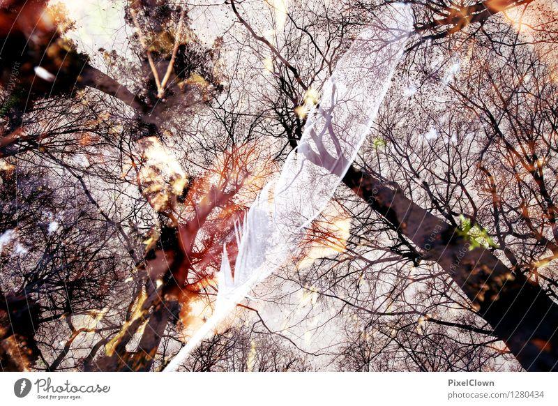 Wald Natur Ferien & Urlaub & Reisen Pflanze schön Baum Landschaft Blatt ruhig Tier dunkel Gefühle Herbst Stil Holz Lifestyle