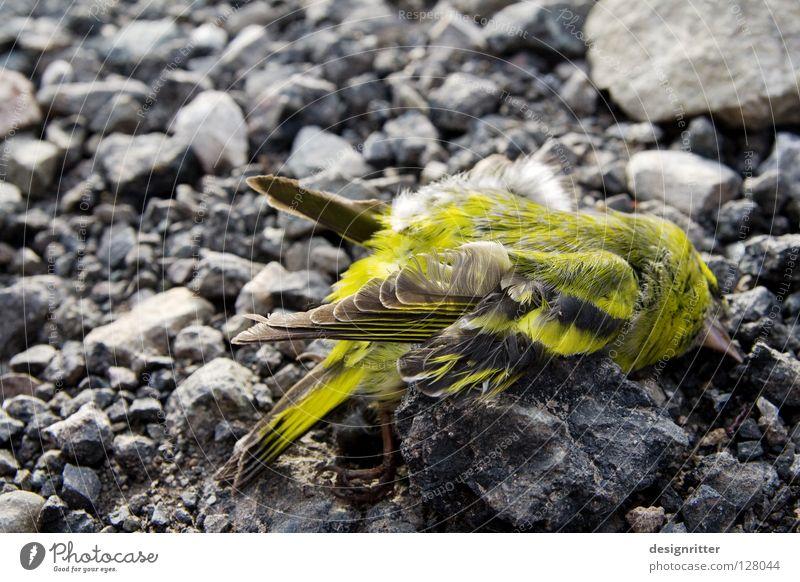 Ende einer Reise Vogel grün gelb grün-gelb Tod abgestürzt Absturz Sturz Endstation Unfall Gewalt Blut verletzen Trauer verlieren verloren Hoffnung Leben live