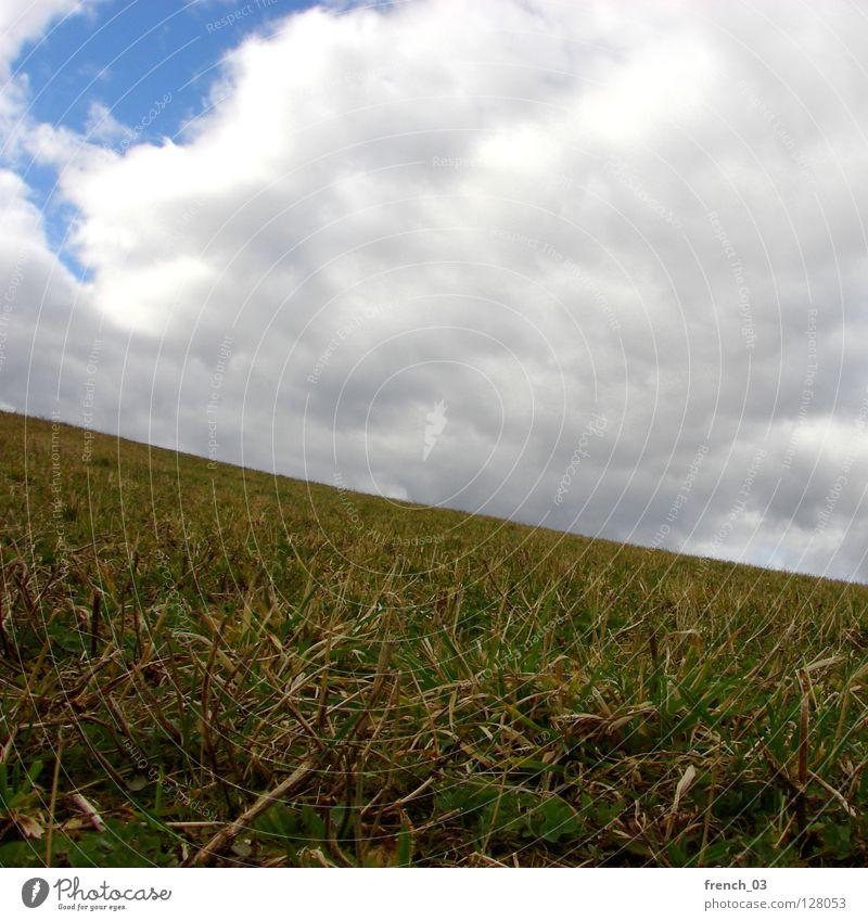 absteigende Diagonale Himmel zyan Gras Wiese Wolken weiß Licht genießen grün saftig Frühling diagonal Abstieg aufsteigen ruhig Erholung Sommer Jahreszeiten