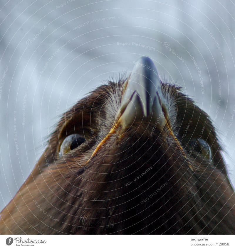 Adler Natur schön Auge Tier Farbe Leben oben Vogel Umwelt Feder Sehnsucht Schnabel Stolz Greifvogel Ornithologie