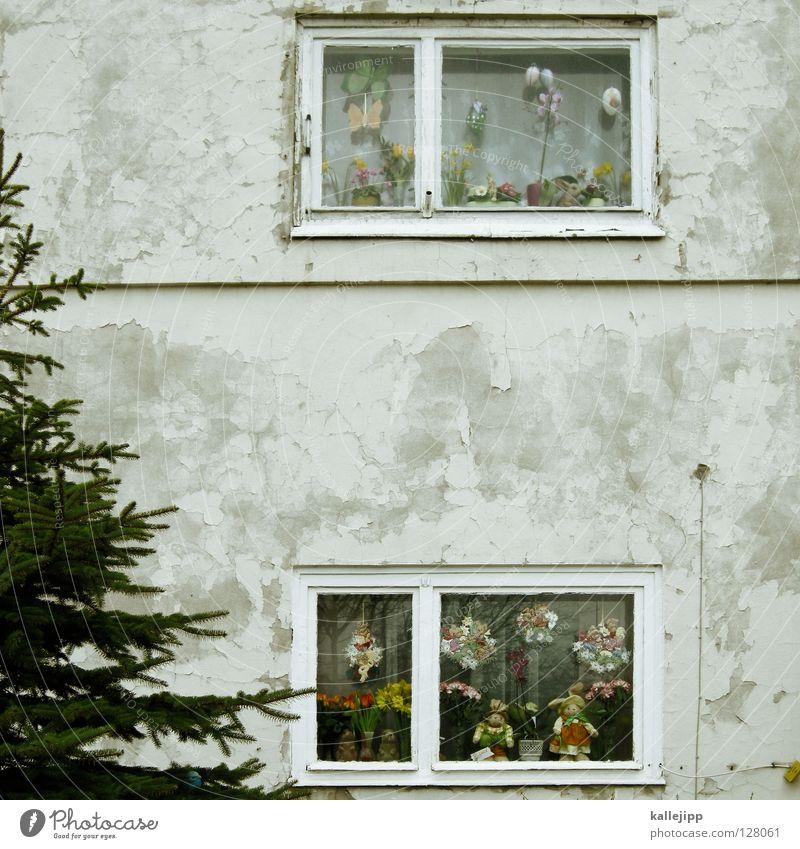two in one: christmans and easter special Weihnachten & Advent Straße Fenster Vogel 3 Dekoration & Verzierung Ostern Kochen & Garen & Backen Kitsch Bürgersteig Tanne Schmuck Hase & Kaninchen Zweig Ei Christentum