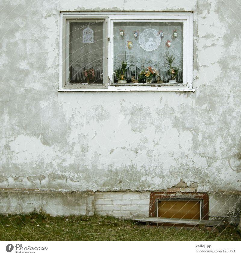 du bist ostern Ostern Osterei Haushuhn Vogel Eigelb Oval Bürgersteig Spiegelei 3 Schmuck Dekoration & Verzierung Tanne Klischee Feiertag Christentum Fenster