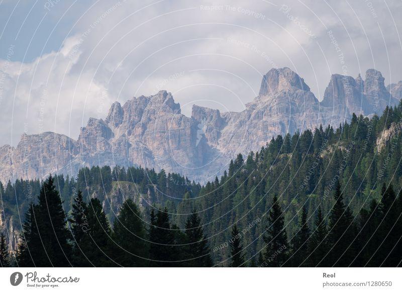 Hell Dunkel Staffelung Umwelt Natur Landschaft Urelemente Erde Himmel Wolken Sommer Schönes Wetter Baum Nadelwald Wald Felsen Alpen Berge u. Gebirge Dolomiten