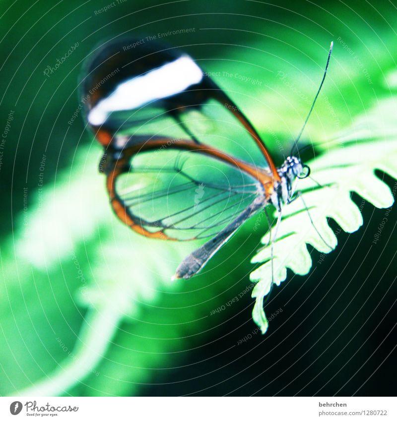 waldgeist Natur Pflanze schön grün Sommer Erholung Blatt Tier Frühling Wiese klein außergewöhnlich Garten fliegen Park elegant