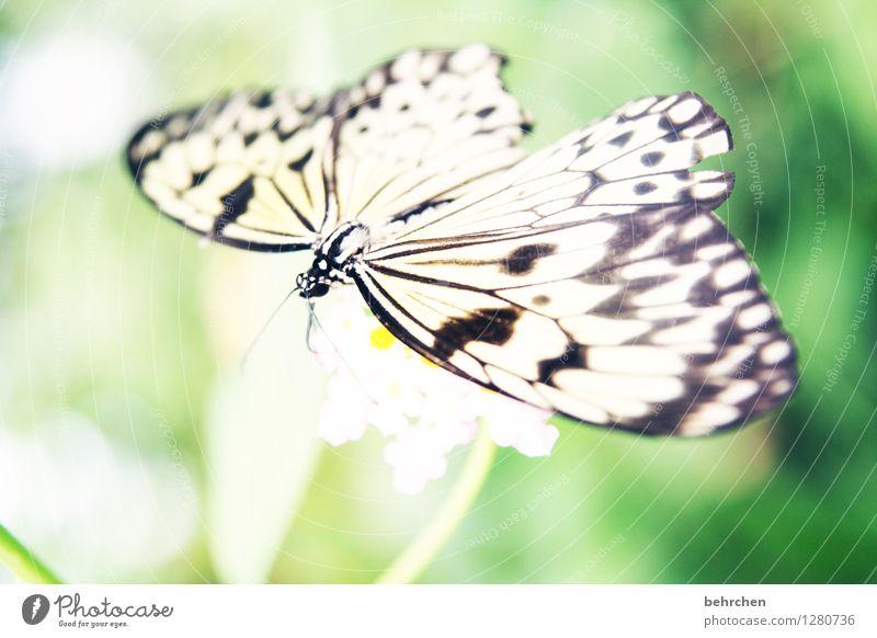 obligatorisch... Natur Pflanze Tier Frühling Sommer Schönes Wetter Blume Blatt Blüte Garten Park Wiese Wildtier Schmetterling Flügel 1 beobachten Blühend