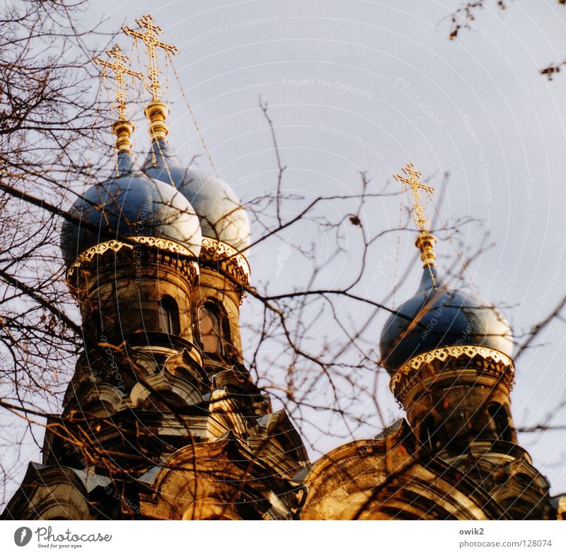 Glaubenszeichen alt Baum Architektur Religion & Glaube oben leuchten gold Rücken Kirche Ast Zeichen Neigung historisch Bauwerk Zweig