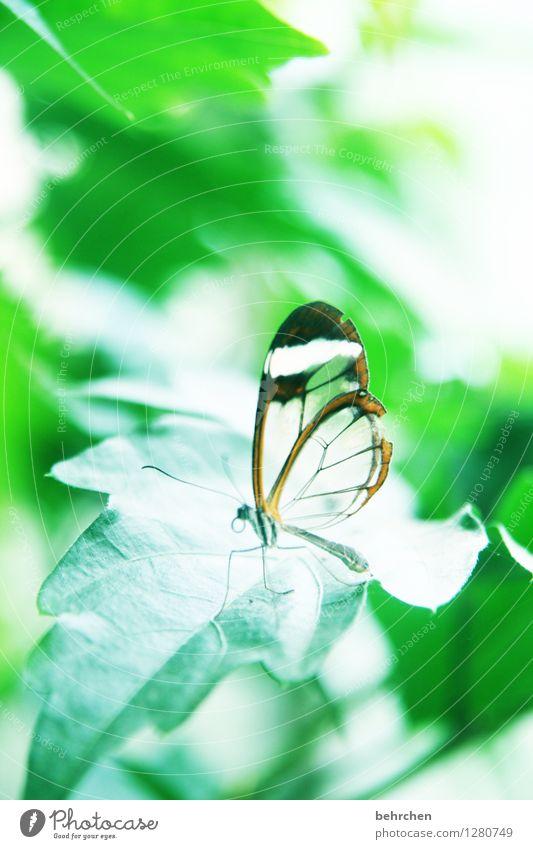 schwerelos Natur Pflanze grün schön Sommer Blatt Tier Wald Frühling Garten außergewöhnlich fliegen Beine Park elegant sitzen