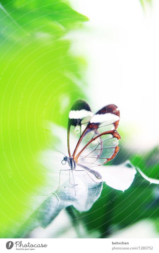 puck Natur Pflanze schön grün Baum Erholung Blatt Tier Wiese klein außergewöhnlich Garten fliegen Park elegant Wildtier