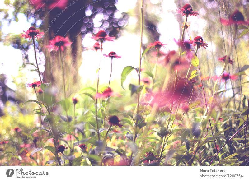 Dear Summer schön harmonisch Zufriedenheit Meditation Dekoration & Verzierung Umwelt Natur Pflanze Frühling Sommer Wetter Schönes Wetter Blume Gras Sträucher