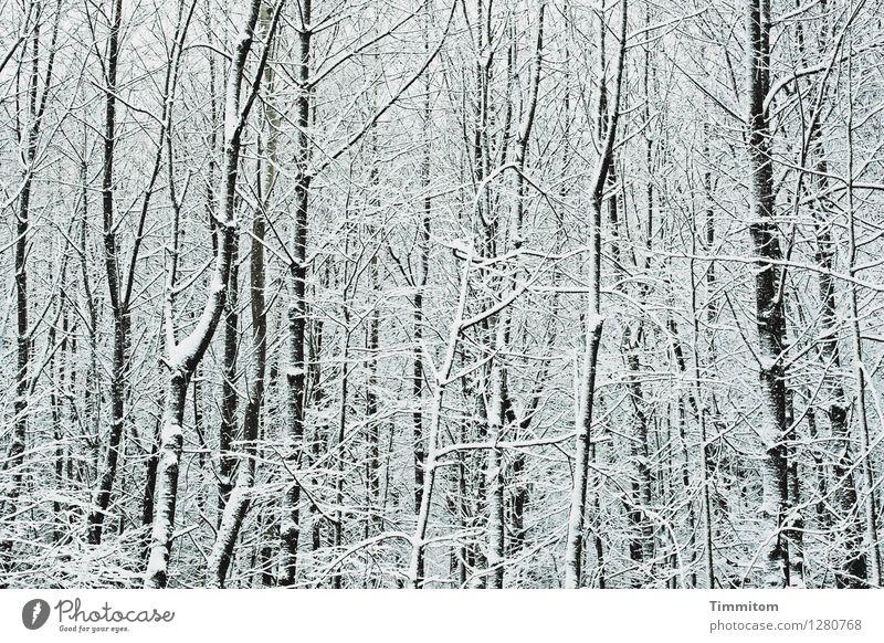Irrläufer. Natur weiß Winter Wald schwarz kalt Umwelt Gefühle natürlich Schnee grau ästhetisch kahl