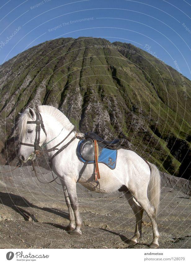 whitehorse Pferd Blauer Himmel Vulcano Vulkan Pony Ponys blau Landschaft Landzunge Landweg Natur Tier weiß Stein Säugetier Berge u. Gebirge Verkehr unicorn