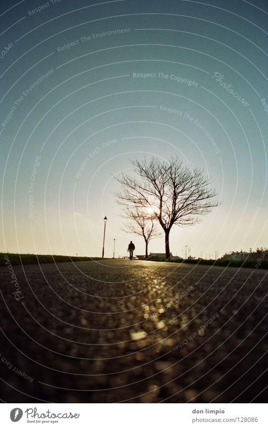 (ohne Titel) Baum analog unbearbeitet Verkehrswege Morgen Wege & Pfade Single Republik Irland galway