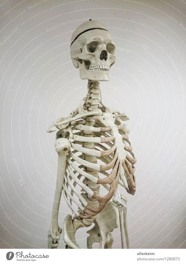 Gerippe, Knochen, Schädel, Skelett Gesundheitswesen Schule lernen Studium Arzt Körper Kopf Brust Krankheit weiß Tod Rippen Anatomie Wirbelsäule Gedeckte Farben