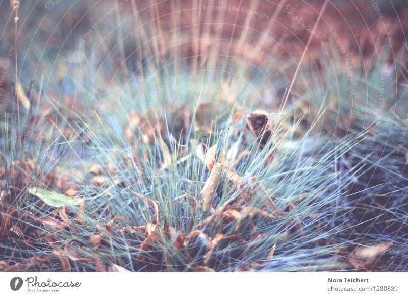 Bodenwelten Umwelt Natur Pflanze Erde Herbst Klima Gras Sträucher Blatt Blüte Garten Park Wiese Feld Wald verblüht dehydrieren trist trocken blau braun rot