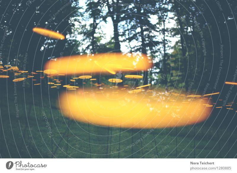 Sonne im Wald Umwelt Natur Landschaft Pflanze Sommer Klima Schönes Wetter Baum Garten Park Wiese Feld Zeichen gelb Horizont innovativ Inspiration träumen