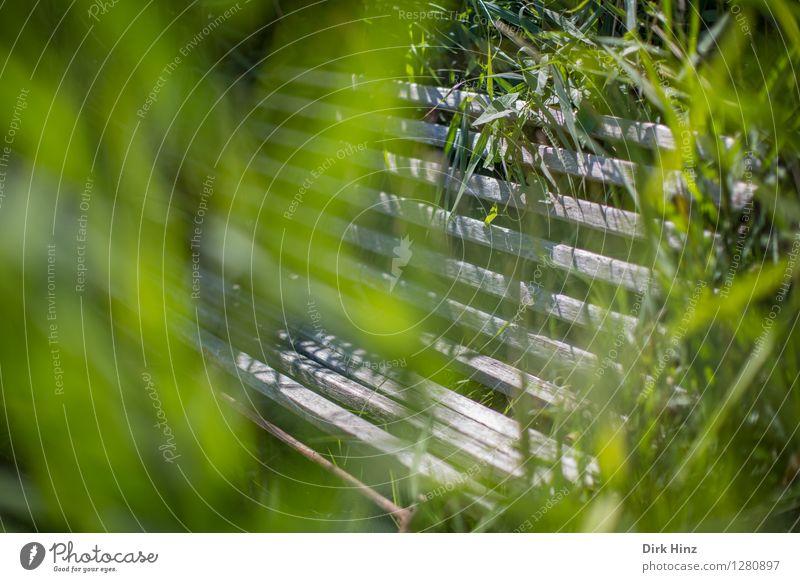 Sitzgelegenheit in der Sundischen Wiese / Zingst Umwelt Natur Sonnenlicht Frühling Sommer Pflanze Gras Sträucher Grünpflanze Garten Park außergewöhnlich