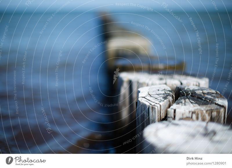 Buhne bei der Hohen Düne / Zingst Natur alt blau Wasser Meer Landschaft Umwelt Küste Horizont Tourismus Wellen planen Wandel & Veränderung Schutz Sicherheit