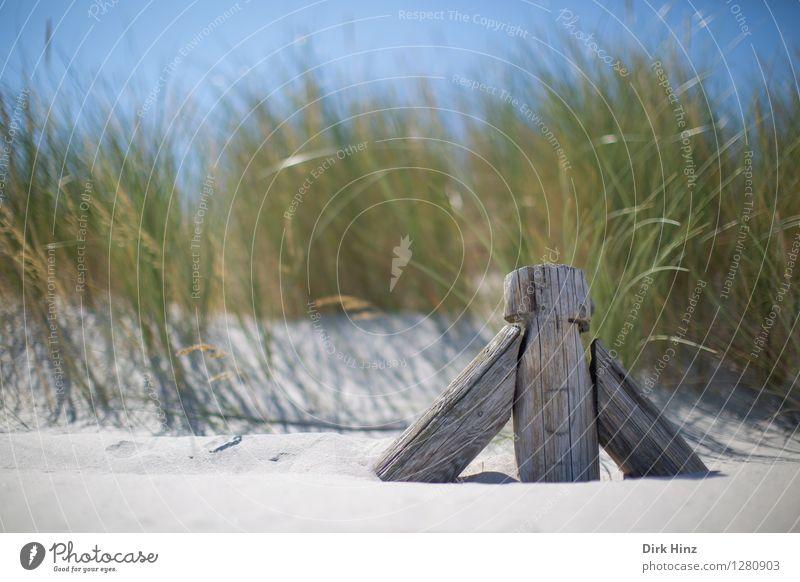 Dünenwanderung Ferien & Urlaub & Reisen Tourismus Ausflug Ferne Sommer Sommerurlaub Sonnenbad Meer Umwelt Natur Landschaft Sand Himmel Frühling Schönes Wetter