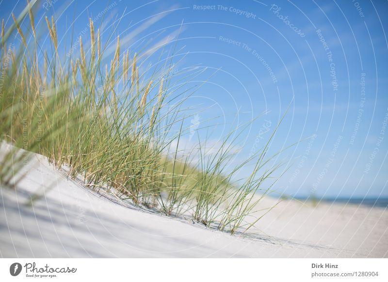 Traumstrand östlich von Zingst Himmel Natur Ferien & Urlaub & Reisen blau Pflanze grün Sommer Meer Landschaft Ferne Strand Umwelt Frühling Küste Freiheit Sand