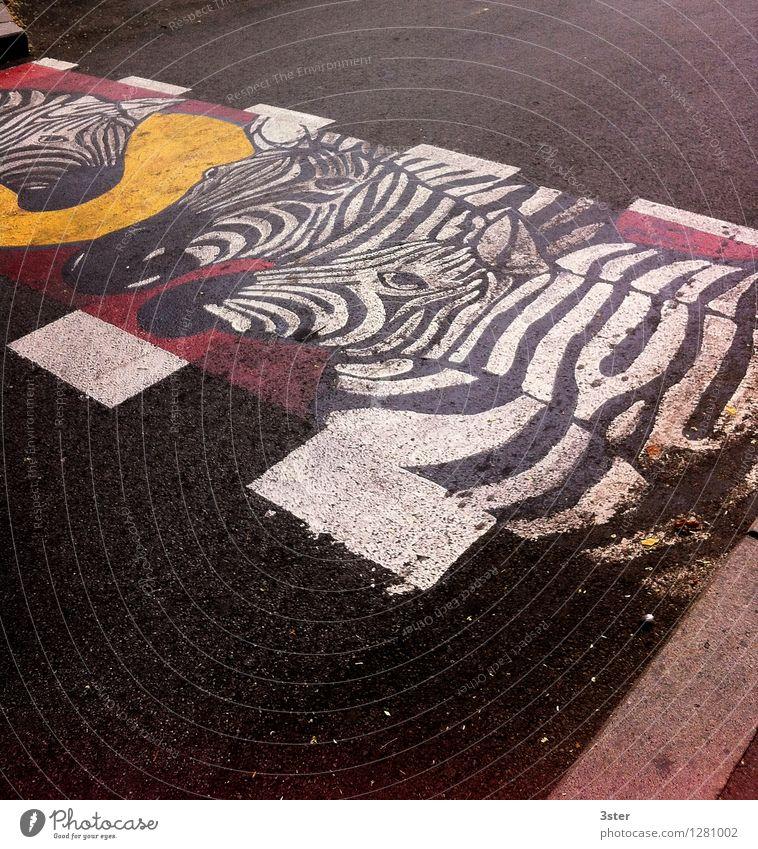 Zebra auf dem Streifen III Verkehrswege Straßenverkehr Tier Zoo Sicherheit Zebrastreifen Farbfoto Außenaufnahme Menschenleer Textfreiraum oben