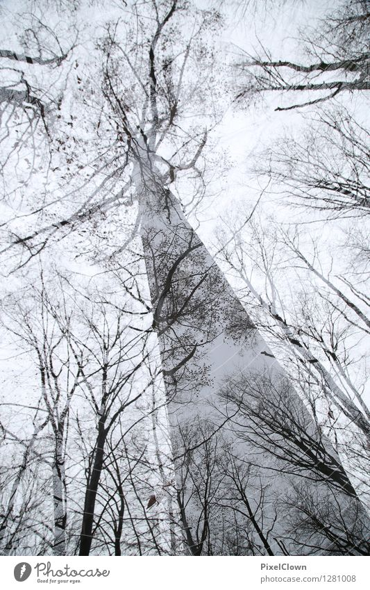 Gigant Natur Ferien & Urlaub & Reisen alt Pflanze weiß Baum Erholung Landschaft Blatt Tier dunkel Wald schwarz Stil Holz außergewöhnlich