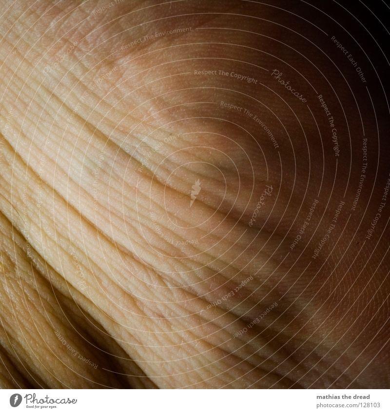 GEBIRGE Silhouette Muster Pore klein Hautfarbe gezeichnet durcheinander Beleuchtung Gefäße Organ organisch rot Leben verzweigt Gesundheit Makroaufnahme
