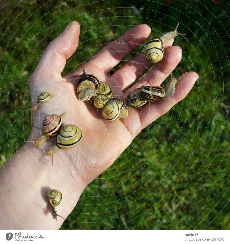 Versammlungsende Blüte Garten Tier Schnecke Tiergruppe Blühend Ekel schneckenkorn schleimig Hand flüchten Ärger Arbeit & Erwerbstätigkeit Appetit & Hunger