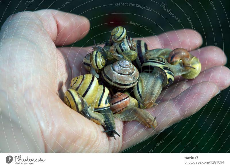 Versammlung Garten Tier Wildtier Schnecke Tiergruppe Blühend Fressen füttern krabbeln Häusliches Leben Ekel Zusammensein schleimig Schneckenhaus Gartenarbeit