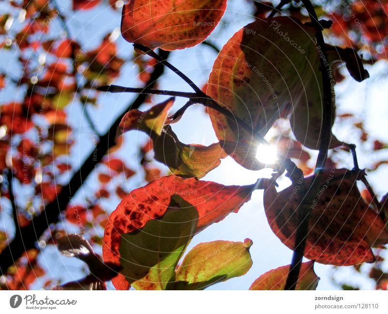 Sonnenblatt 2 Natur grün Baum rot Sommer Blatt ruhig Erholung Graffiti Herbst oben Wind Sträucher Ast Zweig