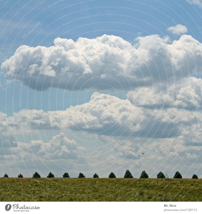 Wolkenfeld weiß grün himmelblau Wolkenbild 13 Glückszahl Toskana Wiese Himmel Baum Laubbaum verdeckt Landschaft Rasen landscape sky Reihe Spitze Freiheit frei
