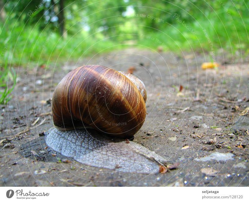 Snail Natur