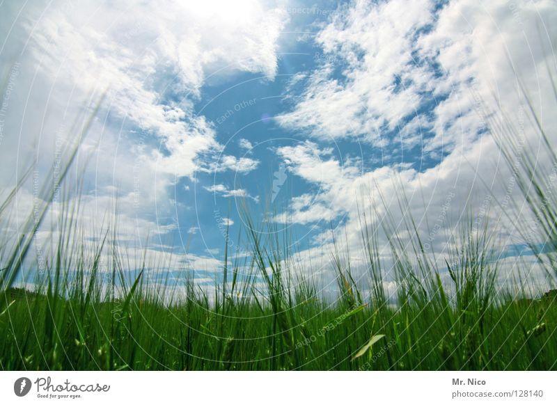 / i l i l i l i \ Himmel weiß grün blau Wolken Feld Landwirtschaft Schönes Wetter Kornfeld saftig himmlisch Ähren himmelblau schlechtes Wetter giftgrün Strichhaar