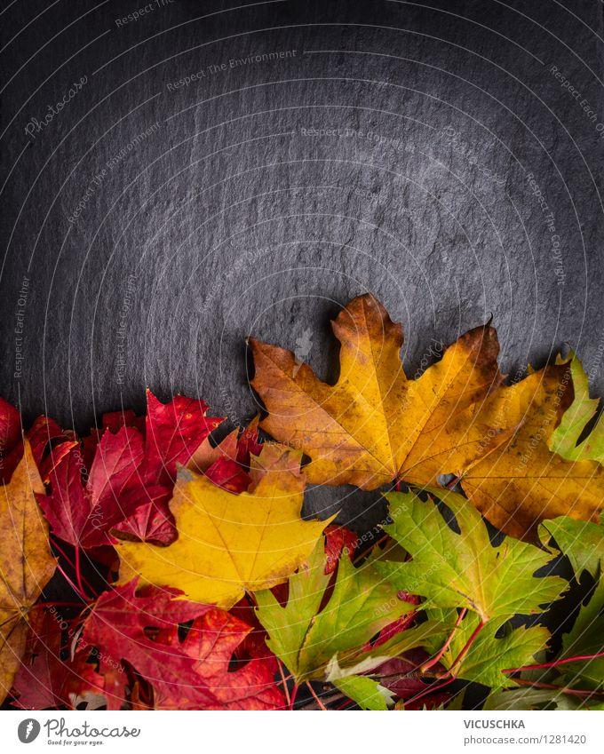Bunte Herbst Laub auf dunklem Hintergrund Natur Pflanze Blatt schwarz gelb Stil Hintergrundbild Garten Park Design Dekoration & Verzierung Tisch retro Tafel