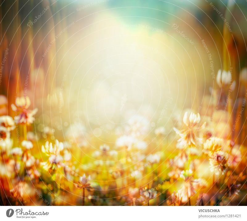 Herbst Hintergrund mit Wiesenblumen Natur Pflanze schön Sommer Blume Landschaft Gras Hintergrundbild Garten Lifestyle Park Design weich retro