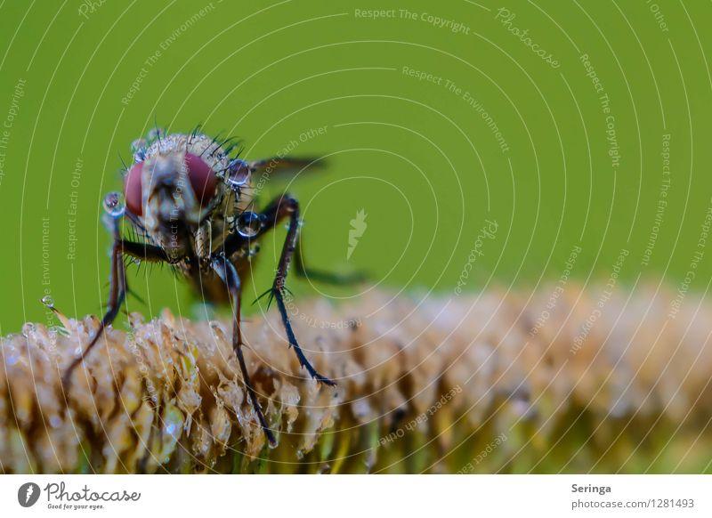Nach dem Duschen Natur Landschaft Pflanze Tier Sommer Blume Gras Sträucher Garten Park Wiese Feld Wald Fliege Tiergesicht Flügel 1 fliegen hocken Farbfoto