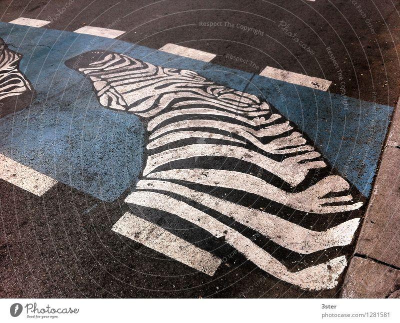 Zebra auf dem Streifen I Stadt Verkehrswege Straßenverkehr Wildtier Zoo Sicherheit Zebrastreifen Farbfoto Außenaufnahme Detailaufnahme Menschenleer