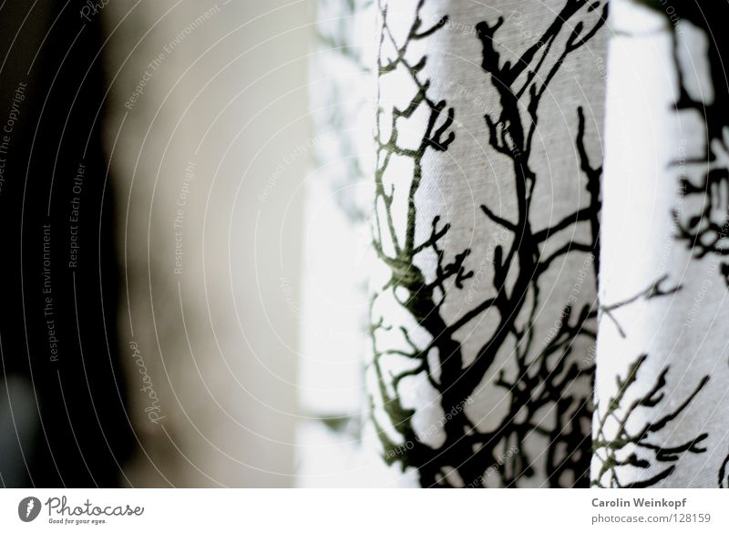 Natur im Flur. Natur weiß Baum grün Stoff Falte Vorhang Flur hängen Gardine Druck Druckerzeugnisse Aufdruck