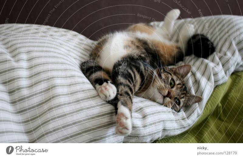 so easy Katze Streifen grün braun Säugetier cat brown liegen Verkehrswege stretch