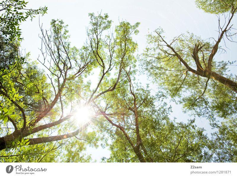 Hans guck in die luft Natur grün Farbe Sommer Sonne Baum Erholung Landschaft ruhig Ferne Wald Umwelt natürlich Freiheit hell träumen