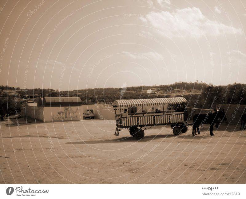 Pferdewagen Pferd Bauernhof Wagen