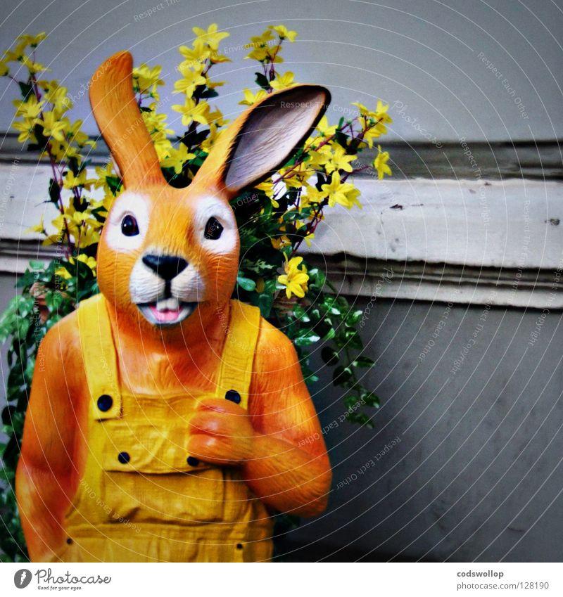 pesky wabbit Angst Ohr Ostern gruselig Hase & Kaninchen Säugetier Arbeiter Alptraum Osterhase Volksmusik Folklore Latzhose Montag Goldregen