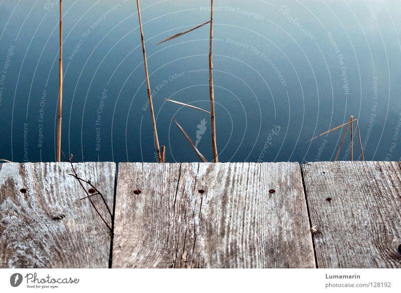 Ende See Steg Holz Ecke Am Rand Schilfrohr Gras Halm trocken kaputt Ankunft Ziel Abschied stagnierend Halt ruhig verfallen Vergänglichkeit Wasser Balken