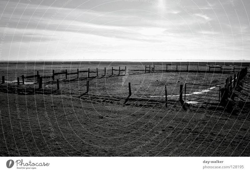 Der Mann aus Kentucky Feld Zaun Pferch Weide Wiese Pfütze Reflexion & Spiegelung Horizont Wolken Steppe Ranch Licht dunkel Cowboy Fressen Barriere