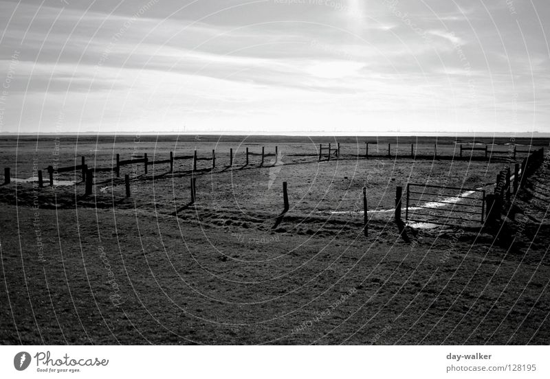 Der Mann aus Kentucky Natur Wasser Himmel Wolken dunkel Wiese hell Feld Horizont Insel Rasen Weide Zaun Barriere Fressen Nordsee