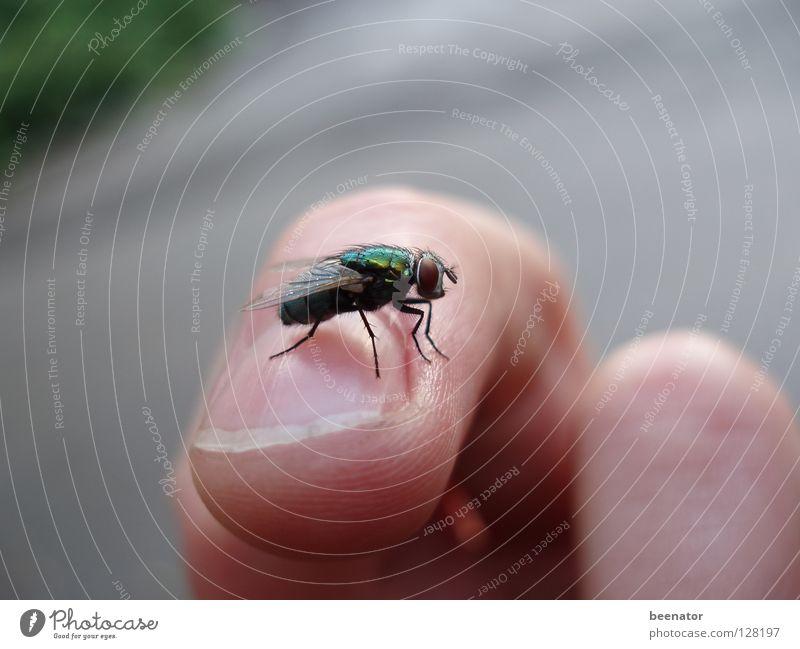 High Fly schön Sommer ruhig Zufriedenheit Haut glänzend Fliege Finger Insekt Fingernagel Härchen