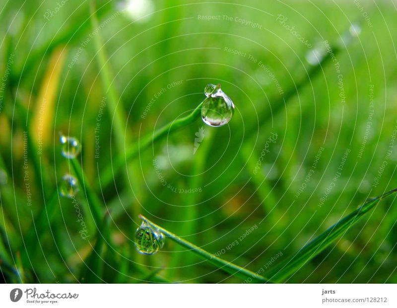 Wenn die Erde weint Wasser grün Wiese Gras Frühling Regen Wassertropfen nass weinen
