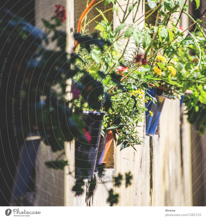 0815 AST | rausgeputzt Pflanze Blume Topfpflanze Bamberg Fensterbrett Blumentopf Blühend Wachstum positiv mehrfarbig Optimismus üppig (Wuchs) Außenaufnahme