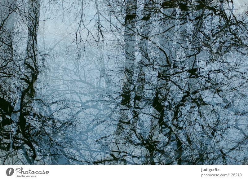 Verspiegelt Wasser Himmel Baum blau Winter Farbe kalt Glas Baumkrone durcheinander Geäst