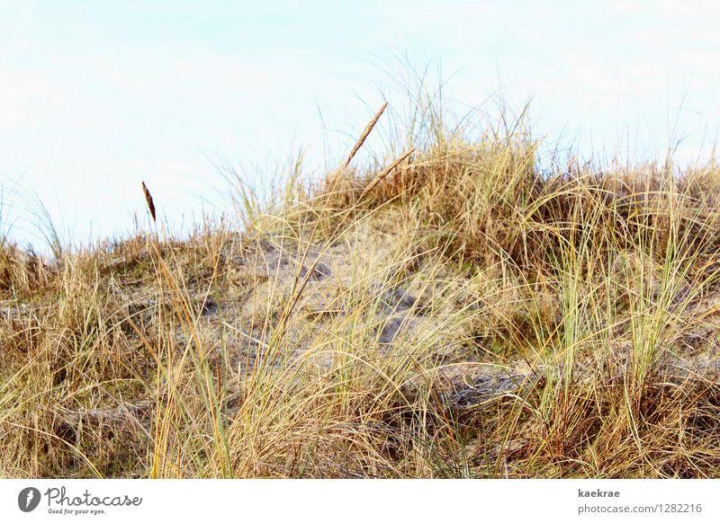 gelb am Strand Ferien & Urlaub & Reisen Insel Umwelt Landschaft Pflanze Sand Himmel Gras Hügel Nordsee Ostsee blau braun gold Bewegung Freiheit Idylle Natur
