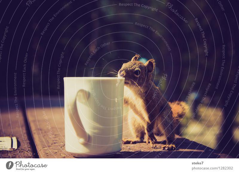 Neugier II Tier Geruch Tasse Camping frech Eichhörnchen Dieb